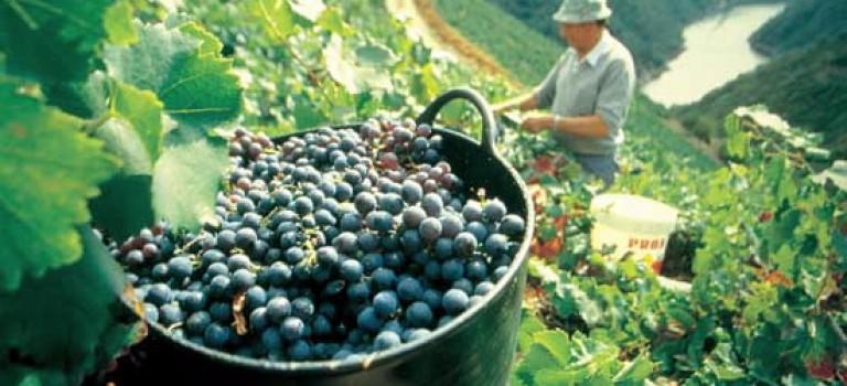 Feria del Viño de Amandi de Sober