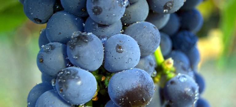 Feria del vino del Condado de Salvaterra