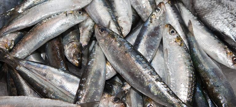 Fiesta de la sardina de Vigo