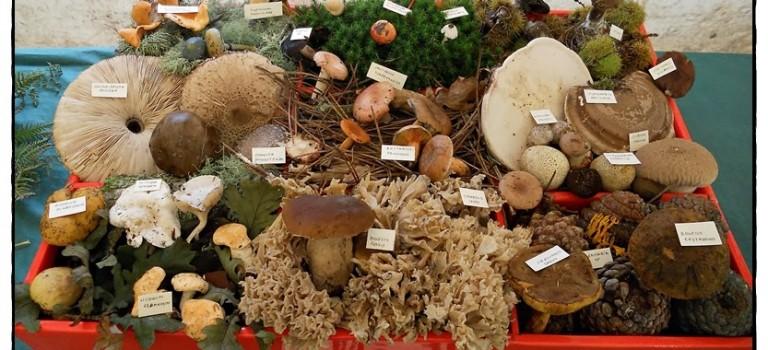 Feria de los hongos y las setas de As Pontes