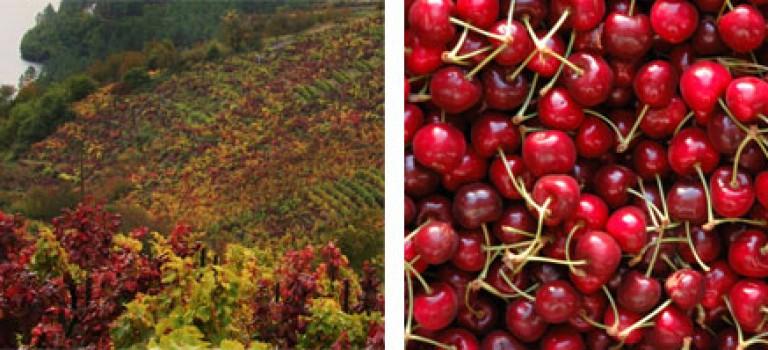 Feria de la cereza y el vino de Belesar